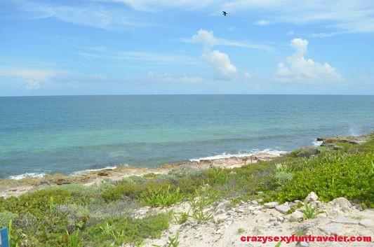 Contoy Island in Mexico (47)