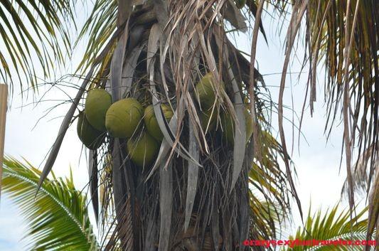 Contoy Island in Mexico (9)