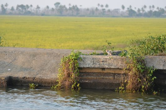 Kerala Backwaters houseboat from Kollam to Alleppey Lake & Lagoons (146)