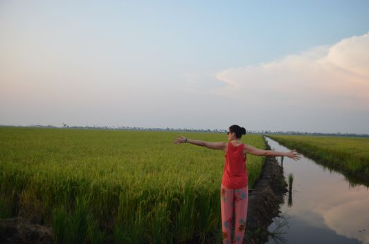 Kerala Backwaters paddy fields  (50)