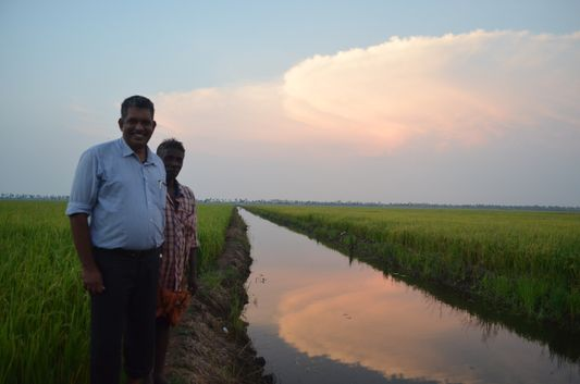 Kerala Backwaters paddy fields  (59)