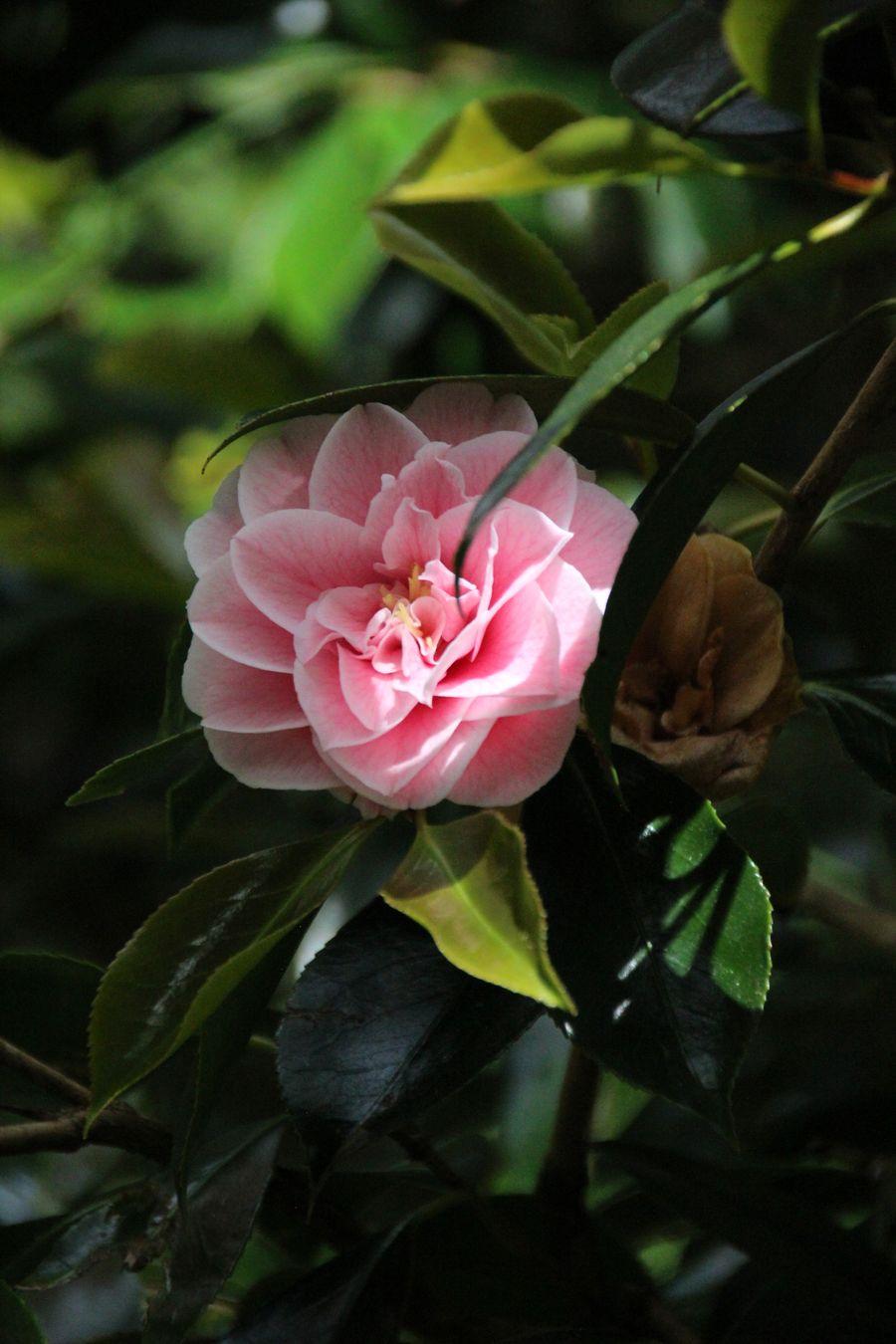 Wellington Botanic Gardens Mochila Nomada (1)