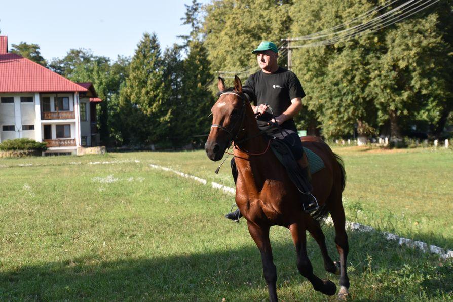 Depozitul de Armasari Dumbrava horses (5)