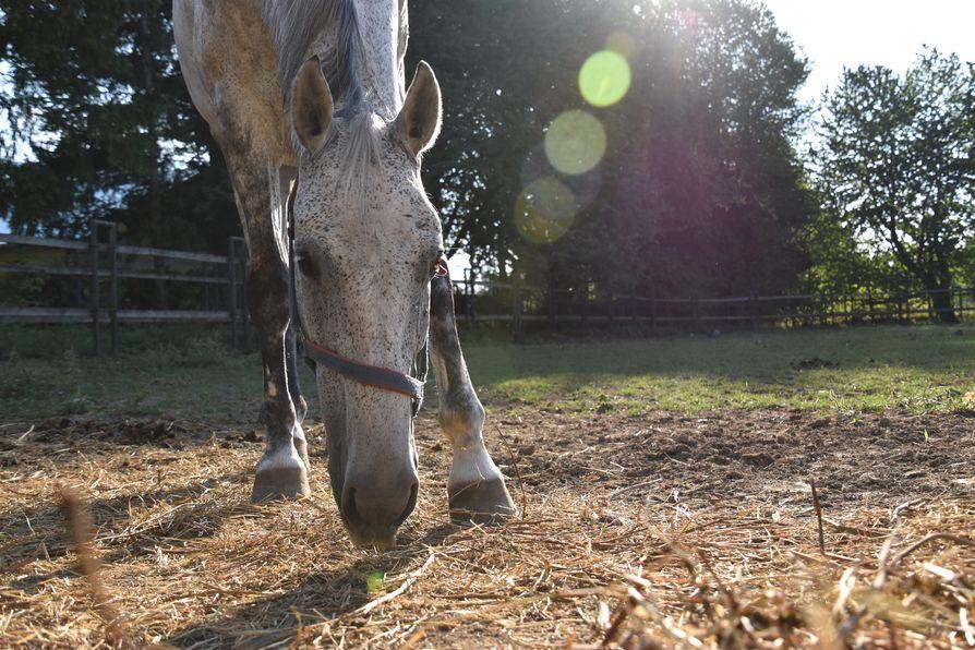 Depozitul de Armasari Dumbrava horses (9)