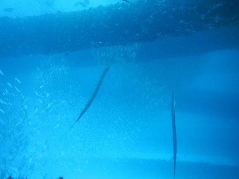 diving in Bali Ok Divers Bali (9)