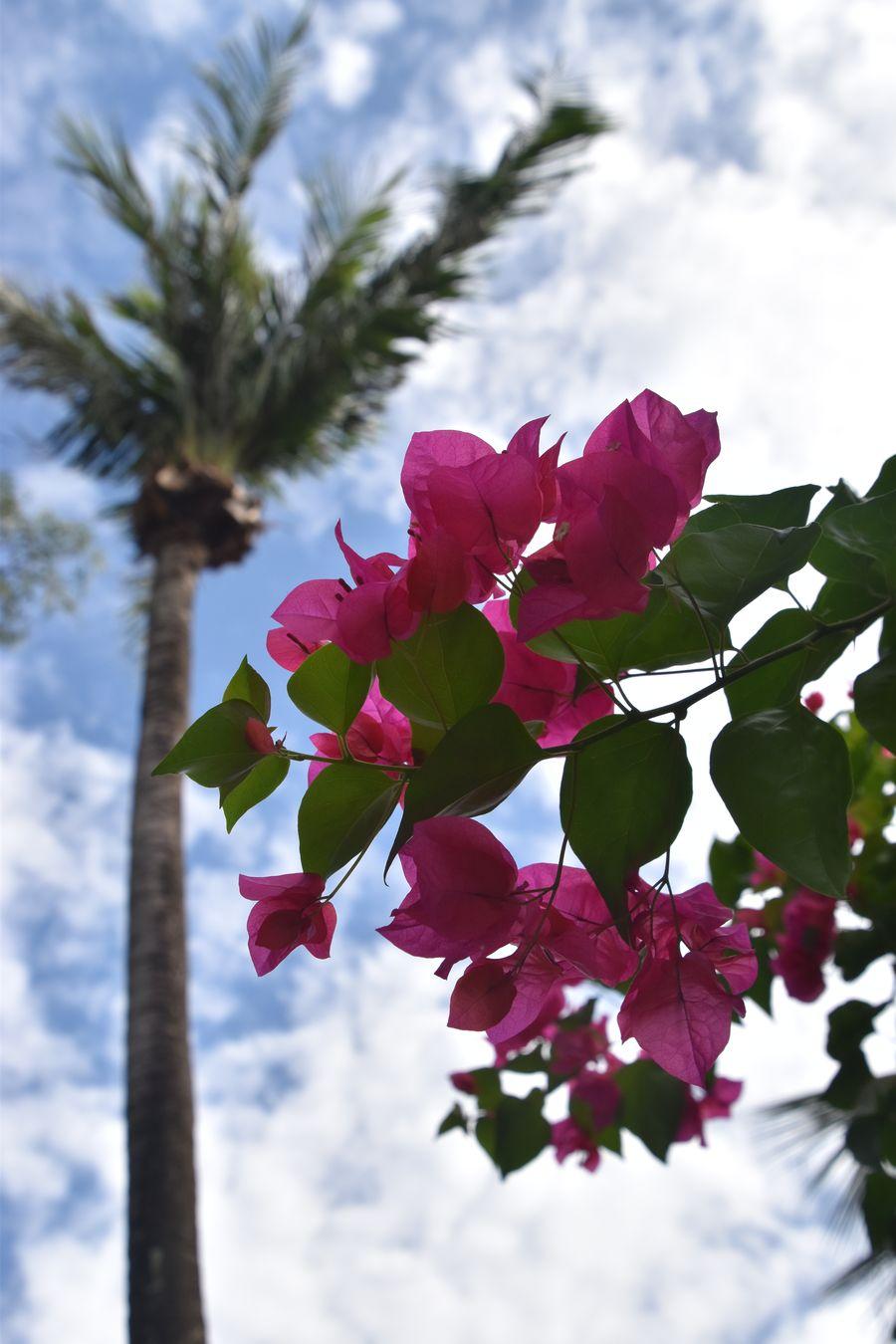 Thavorn Palm Beach Karon beach Phuket (32)