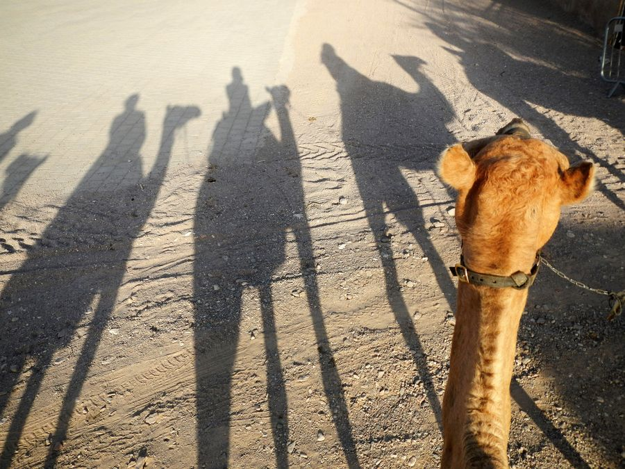 camel-ranch-eilat-3