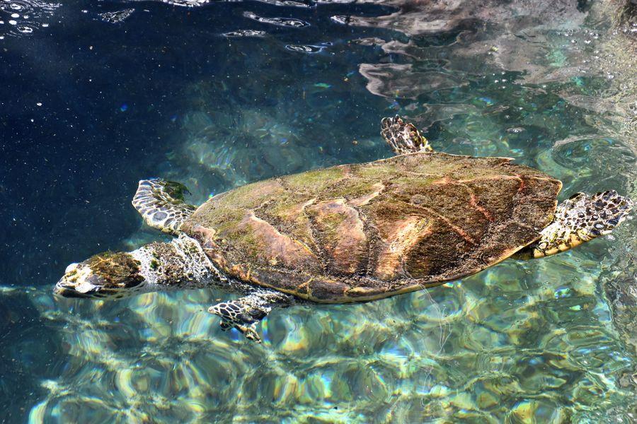 coral-world-underwater-observatory-eilat-2