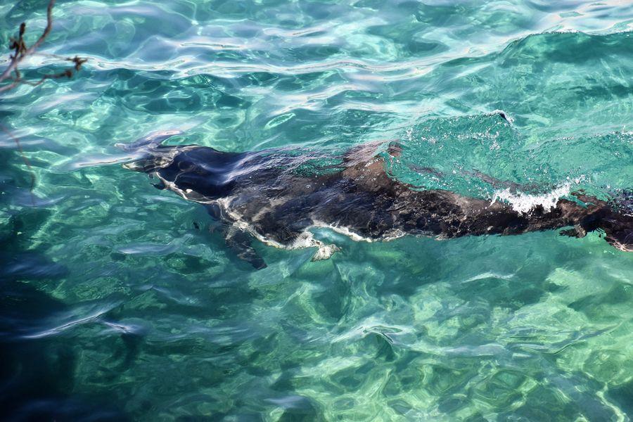 dolphin-reef-eilat-1