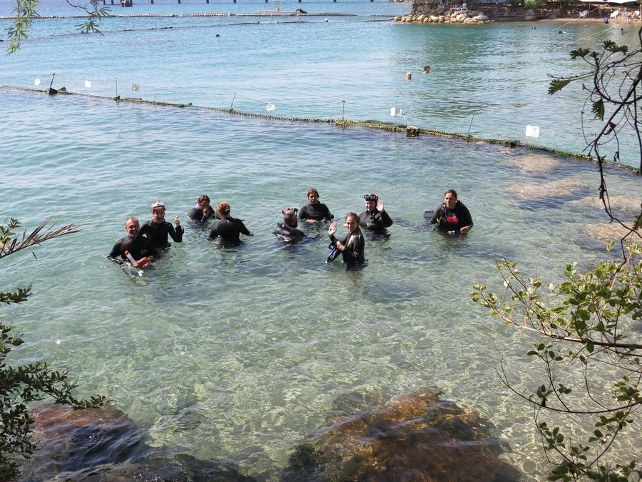 dolphin-reef-eilat-4