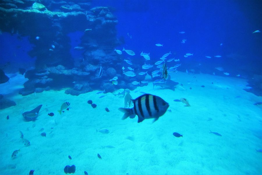 holidays-in-eilat-israel-scuba-diving-eilat-6