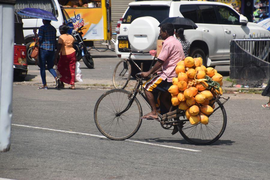 king coconuts in Sri Lanka