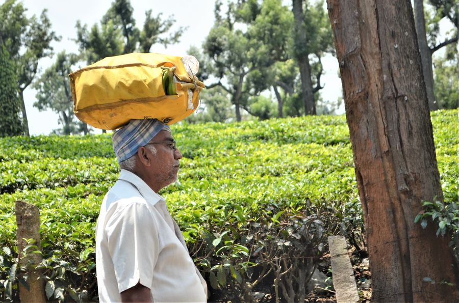 a local man carrying something on his head in Munnar