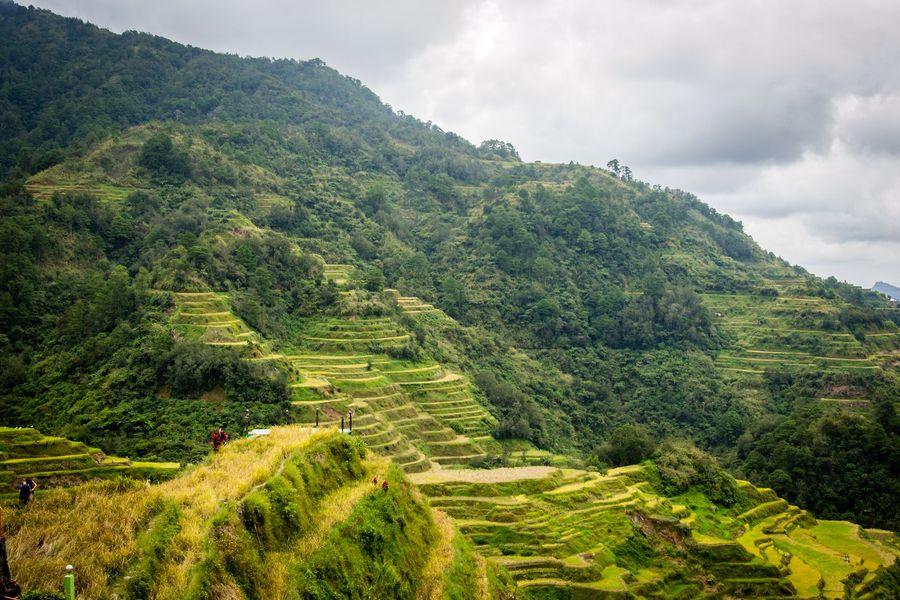 Philippines Banaue rice terraces