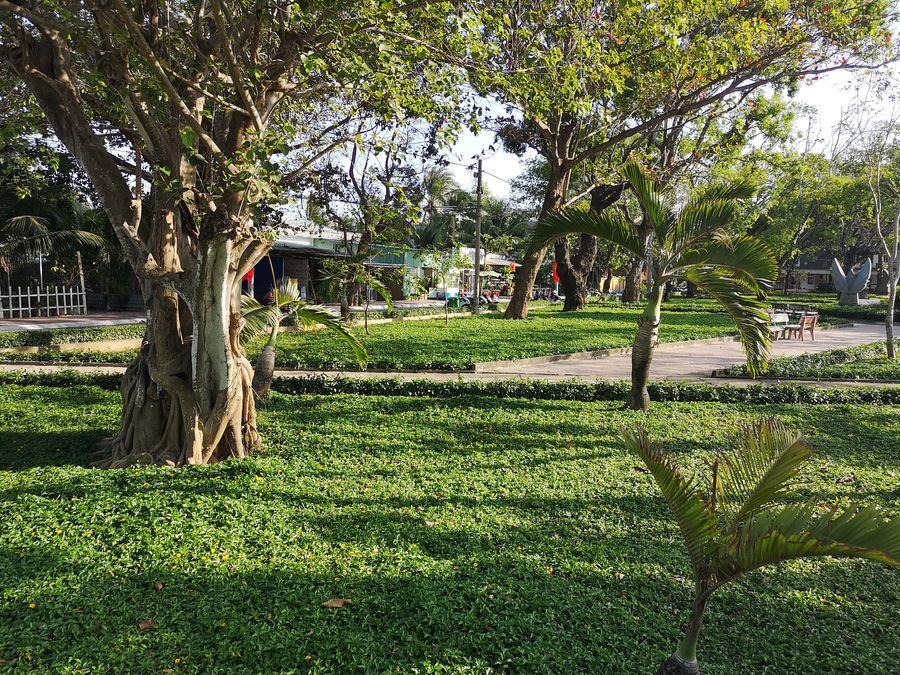 trees on Con Son island