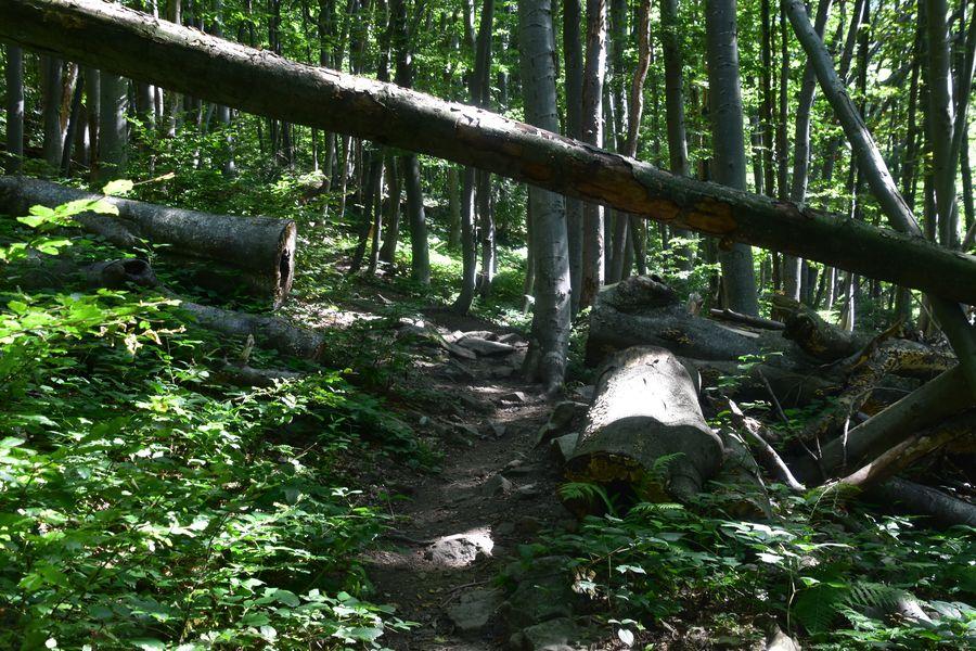 primeval forest Stuzica in Poloniny Slovakia