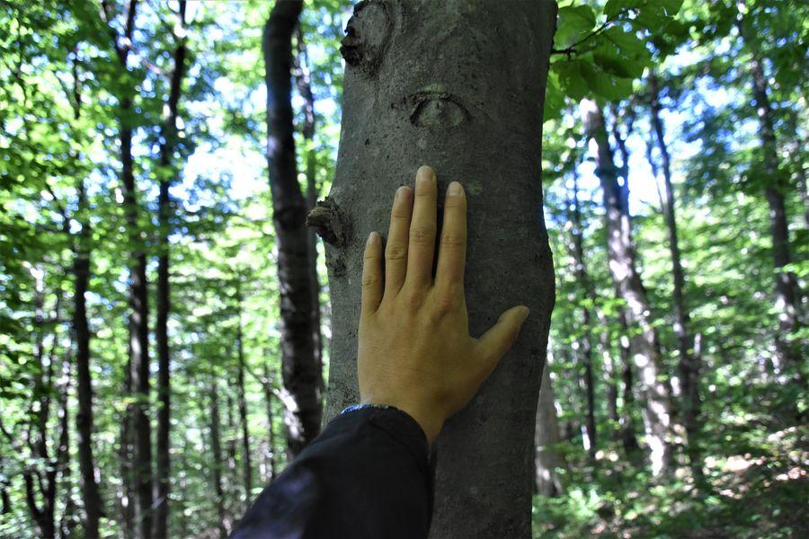 primeval forest Stuzica in Poloniny Slovakia (1)
