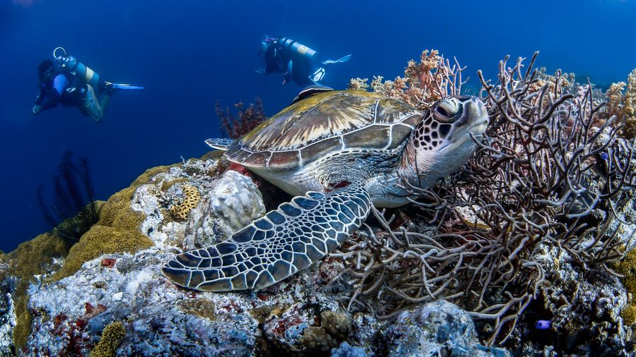 a turtle seen while scuba diving