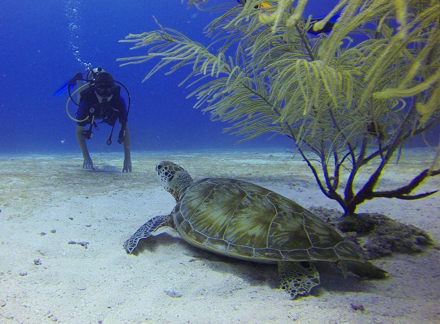 scuba diving in Goa India